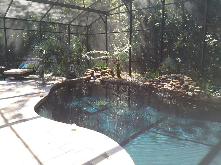 Ave Environmental Jungle Love Pool Area